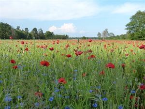 BU: Vielfalt auf dem Acker dient der Insekten- und Vogelwelt. Foto: Landkreis Lüchow-Dannenberg.